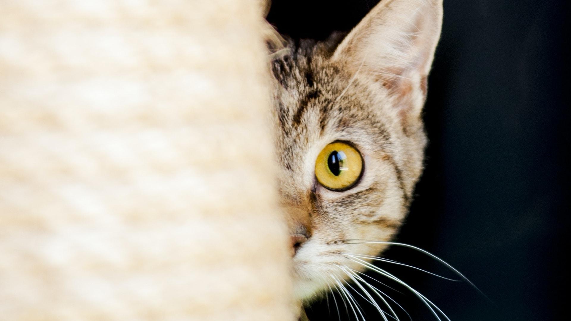 10 Lições que aprendemos com os gatos