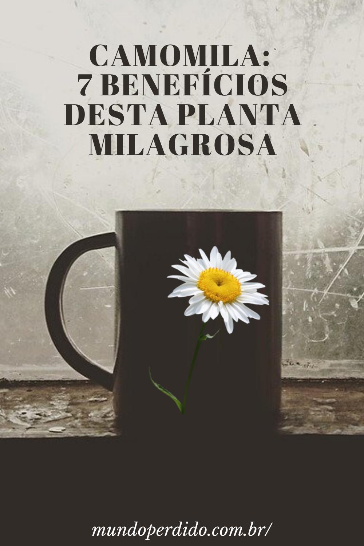 Camomila: 7 Benefícios desta planta milagrosa