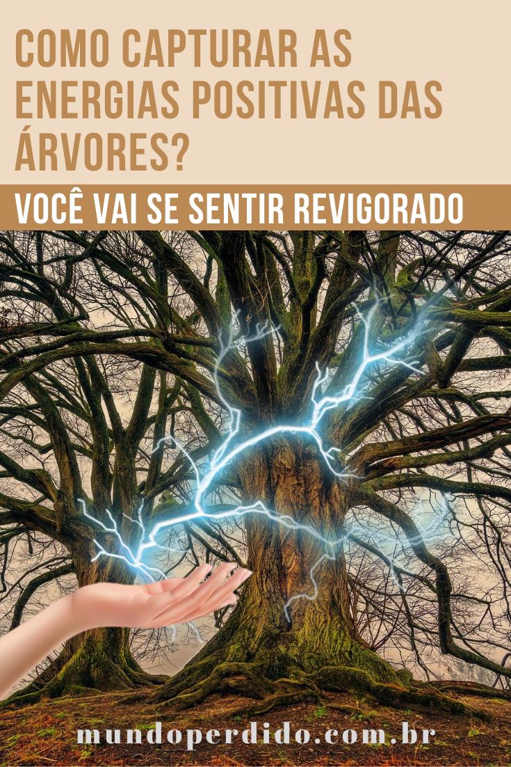 Como capturar as energias positivas das árvores? (Você vai se sentir revigorado)