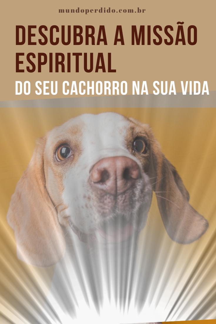 Descubra a missão espiritual do seu cachorro na sua vida