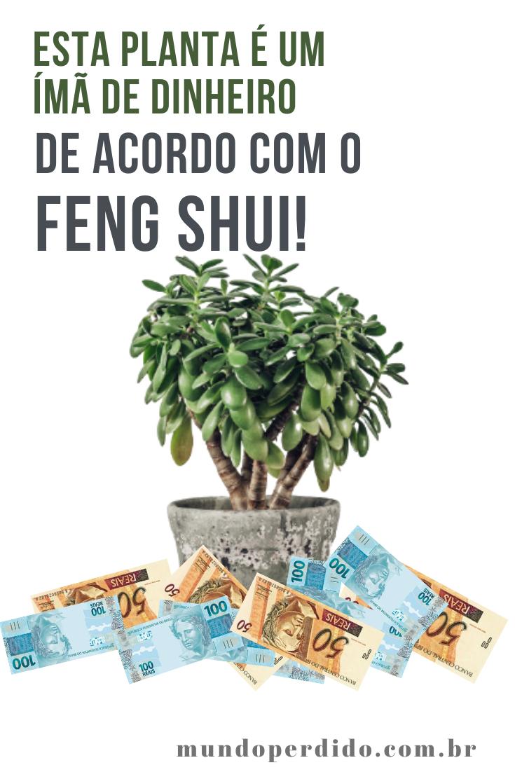 Esta planta é um ímã de dinheiro de acordo com o Feng Shui!