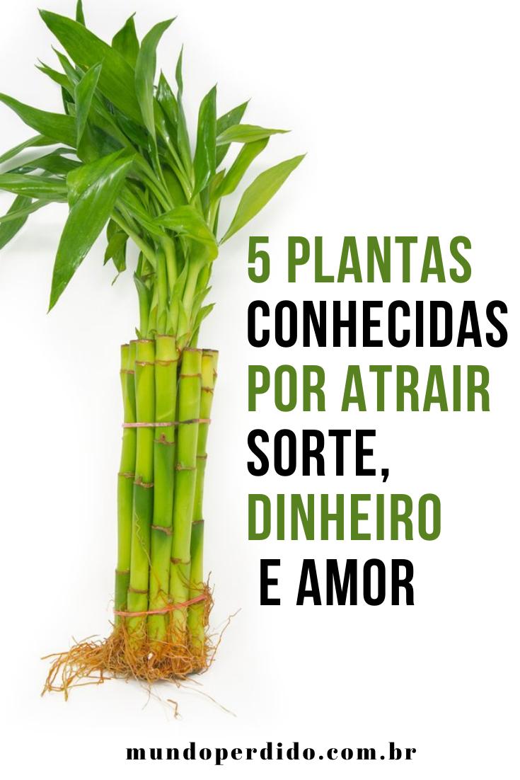 5 Plantas conhecidas por atrair sorte, dinheiro e amor