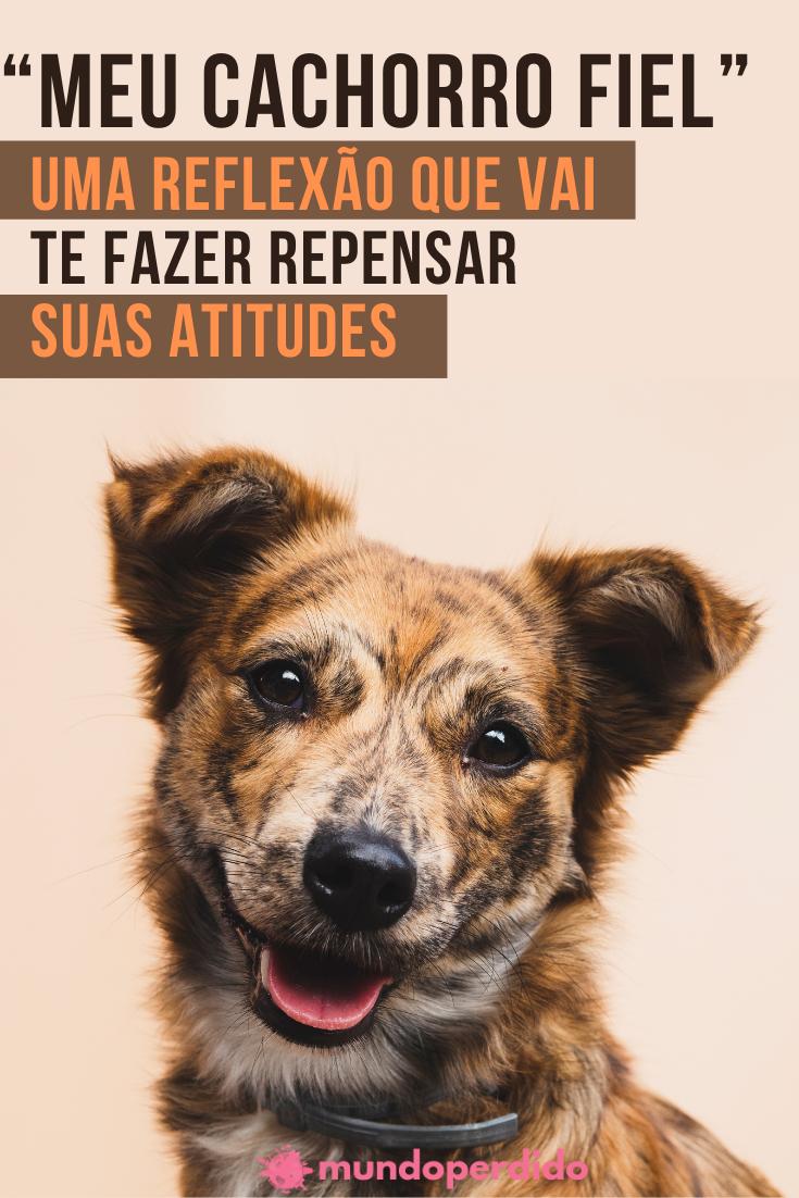 """""""Meu cachorro fiel"""" – Uma reflexão que vai te fazer repensar suas atitudes"""
