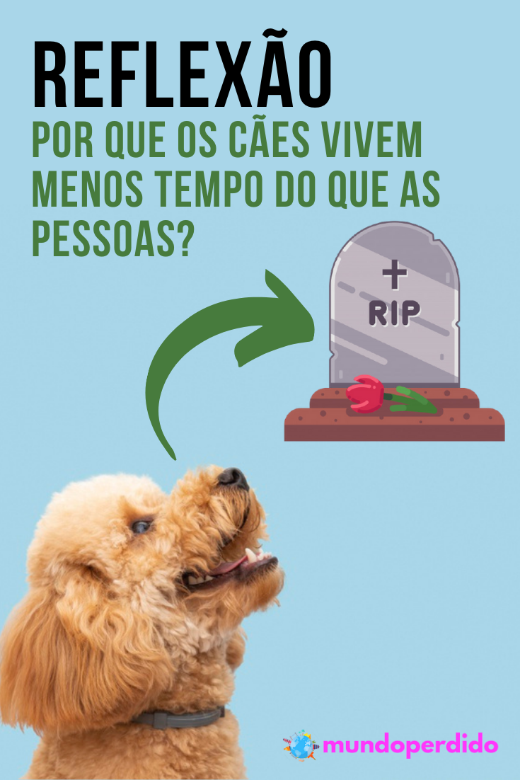 (Reflexão) Por que os cães vivem menos tempo do que as pessoas?