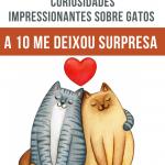 20 Curiosidades impressionantes sobre gatos (A 10 me deixou surpresa)