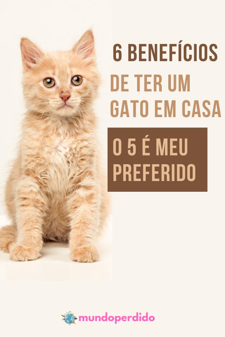 ᐈ 6 Benefícios de ter um gato em casa