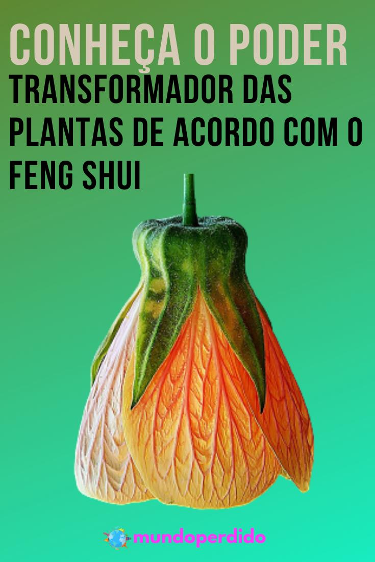 Conheça o poder transformador das plantas de acordo com o feng shui