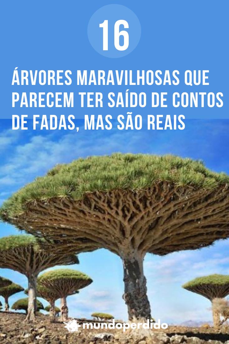 16 Árvores maravilhosas que parecem ter saído de contos de fadas, mas são reais