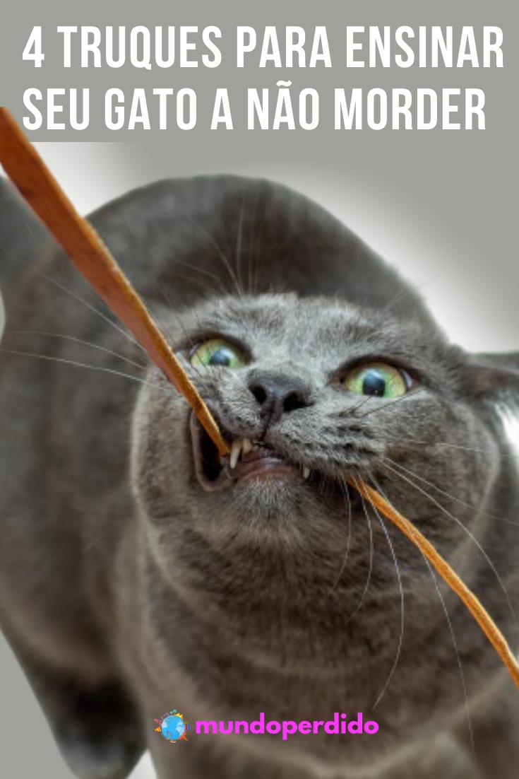 4 Truques para ensinar seu gato a não morder
