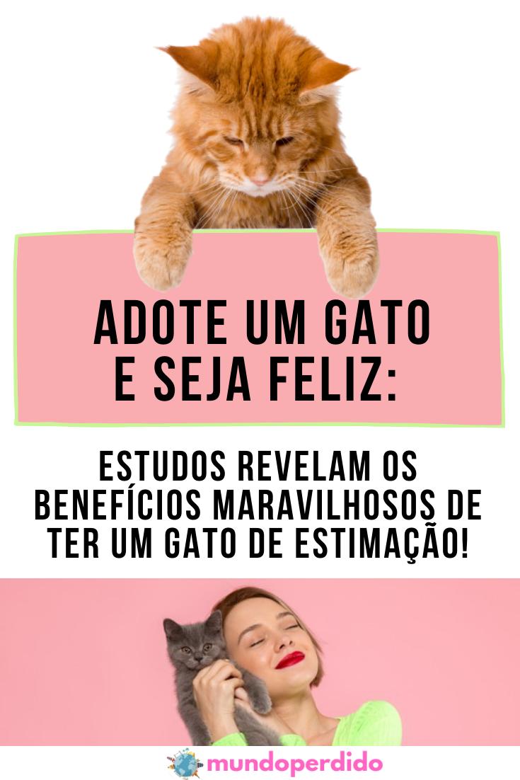 Adote um gato e seja feliz: Estudos revelam os benefícios maravilhosos de ter um gato de estimação!