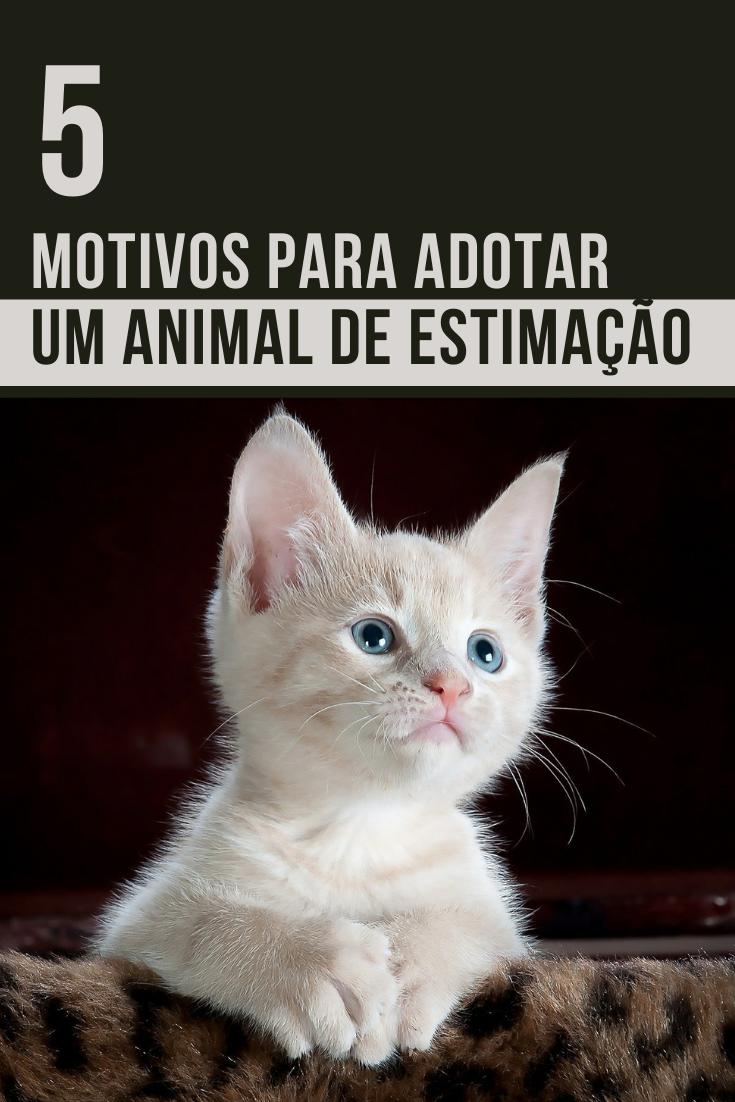 5 Motivos para adotar um animal de estimação