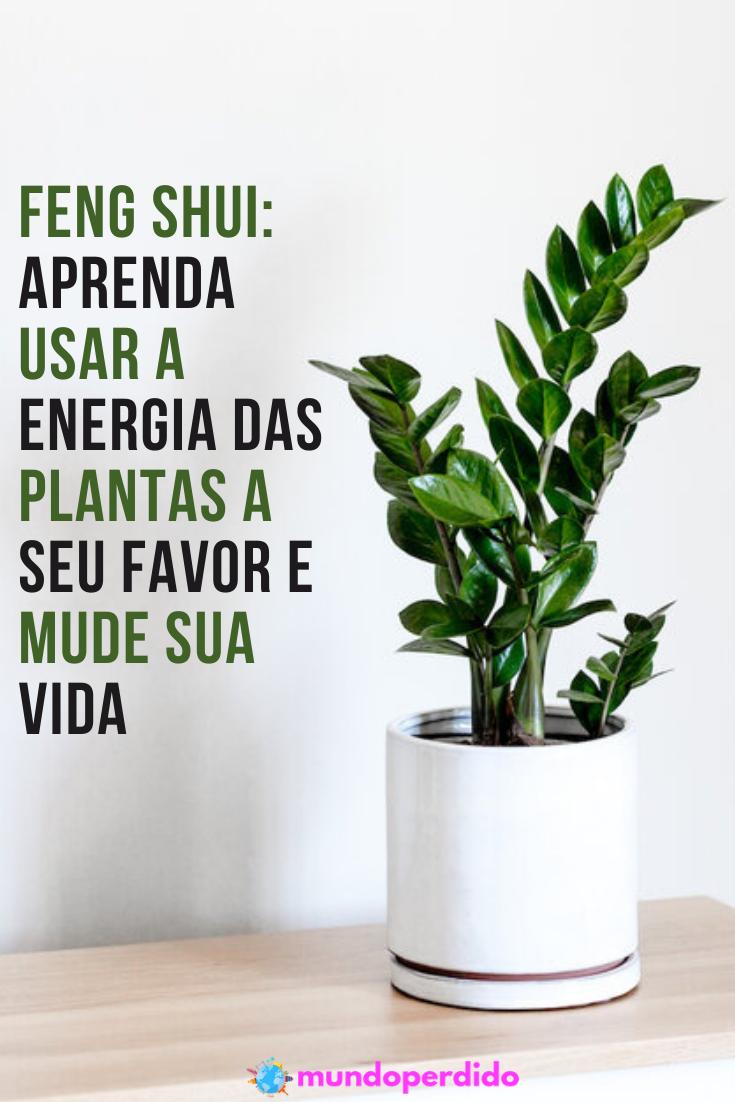 Feng shui: Aprenda a usar a energia das plantas a seu favor e mude sua vida