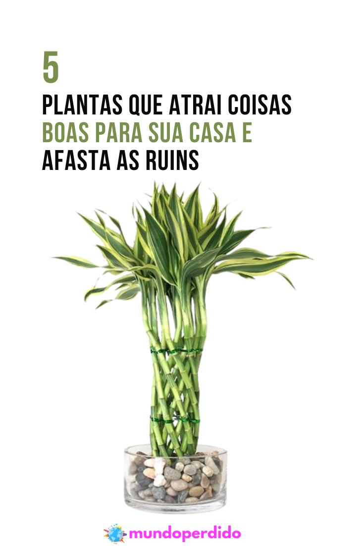 5 Plantas que atrai coisas boas para sua casa e afasta as ruins
