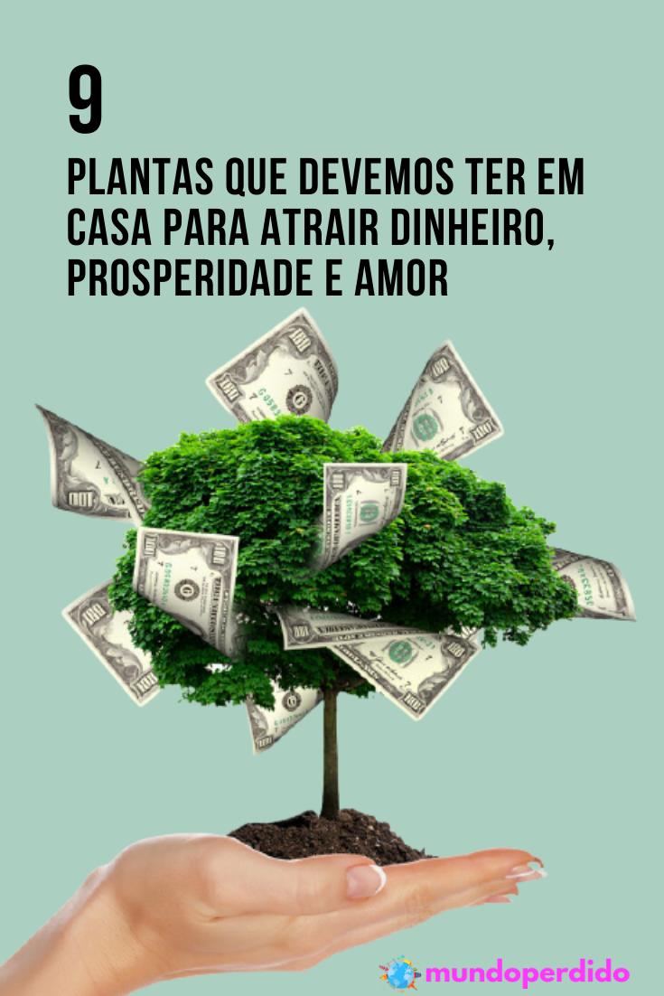 9 Plantas que devemos ter em casa para atrair dinheiro, prosperidade e amor